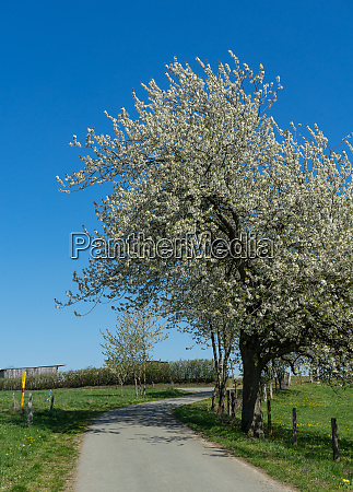 agriculture path with apple trees and