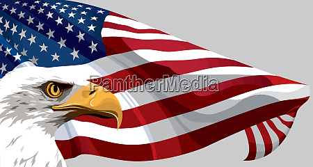 eagle animal usa america flag patriotic