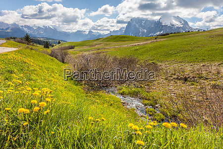 alpine meadows and mountain stream on