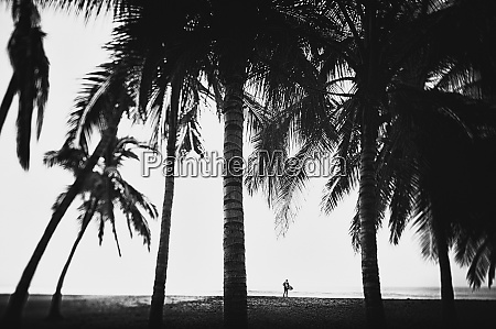 surfer with surfboard under tall palm
