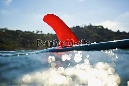 bright red fin on surfboard floating