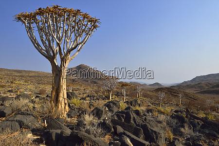 africa namibia namib naukluft mountains namib