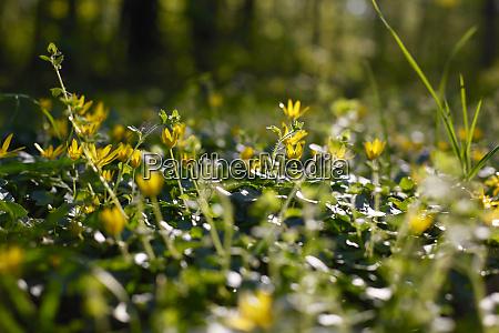 flower meadow at springtime