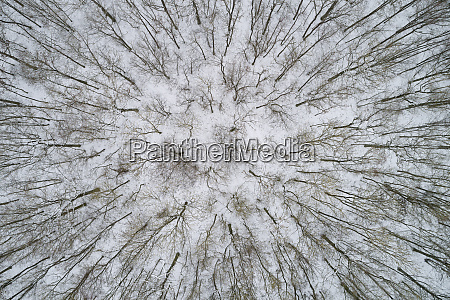 germany bavaria leafless forest trees in