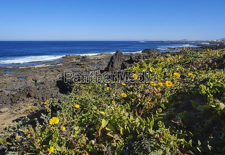 spain canary islands lanzarote tinajo flowers