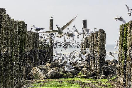flying seagulls between breakwater