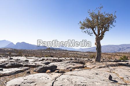rocky plateau near jebel shams oman