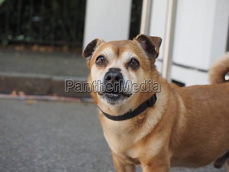 dog animal of class mammalia mammals