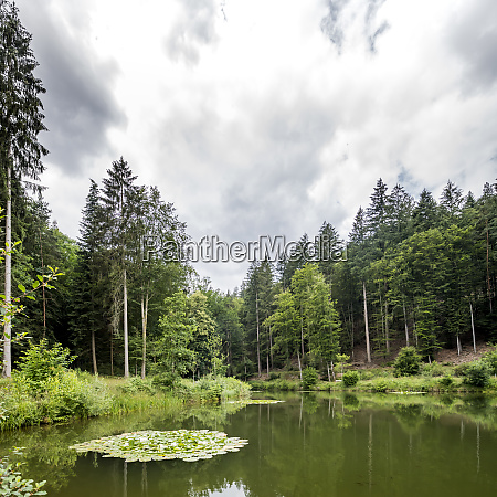 mountain lake with trees and forested