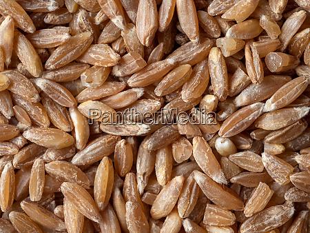 spelt seeds as food background