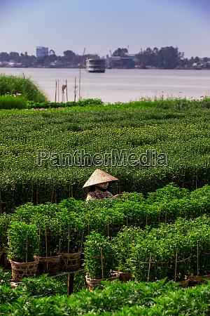 village farmers in the mekong delta