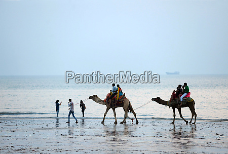 diwali holidaymakers taking camel rides along