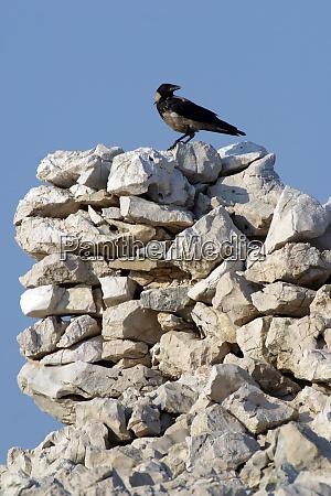 black bird watching area around them