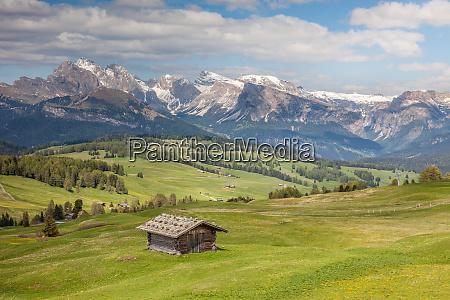 alpine meadows on the alpe di