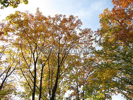 deciduous trees with typical leaf coloring
