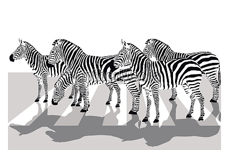 zebras on the crosswalk illustration