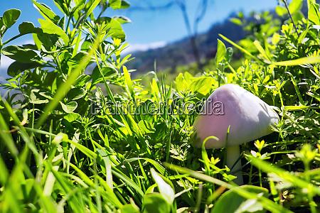 a small cream colored mushroom in