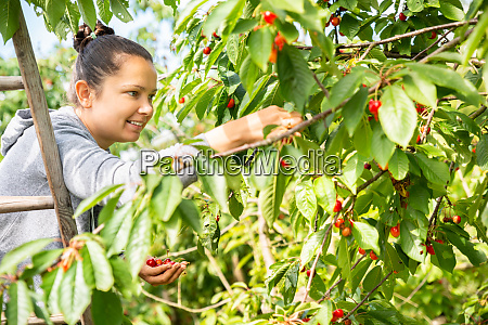 young woman girl picking cherries