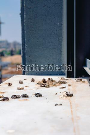 pigeon droppings on the windowsill