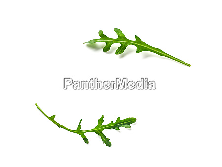 two arugula or rucola leaves with