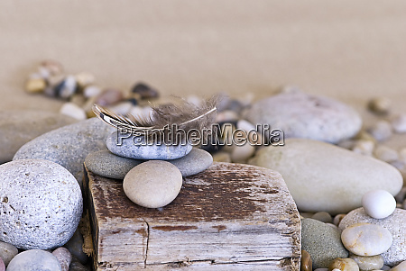 beach still life with feather