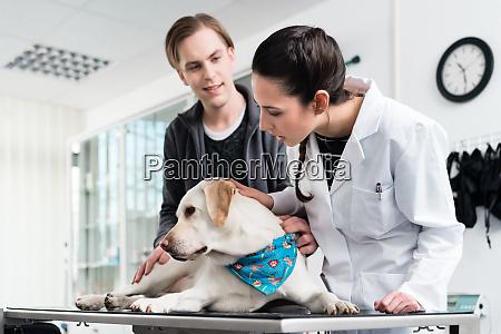 doctor examining dog