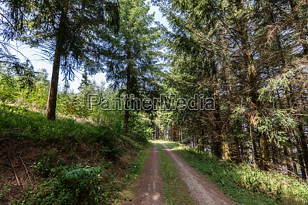 forest with paths and trees for