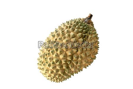 malaysia famous fruits durian