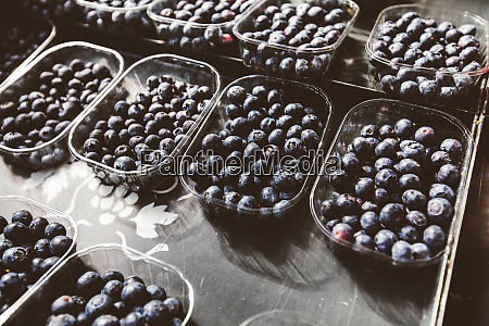 blueberry ready for sale at