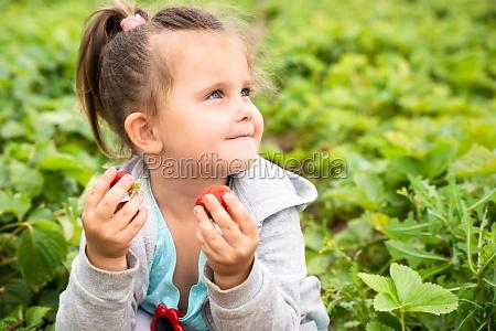 cute girl picking strawberries