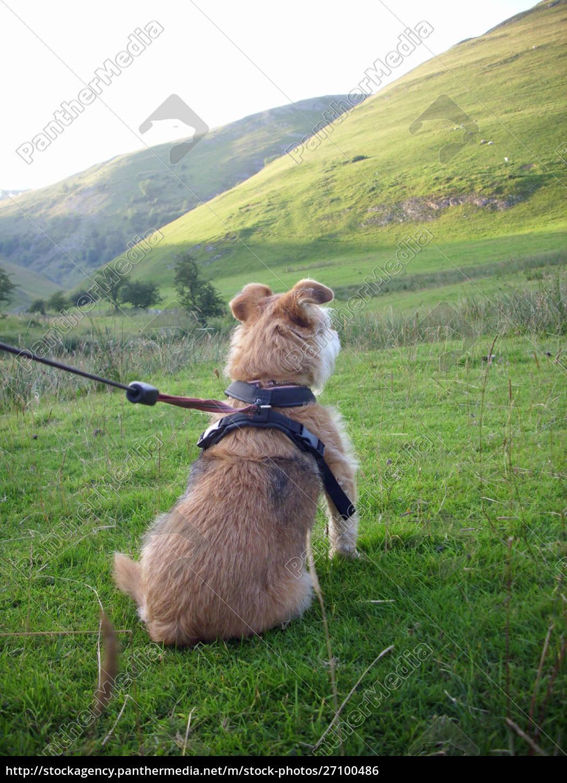 dog, looking, at, hill - 27100486