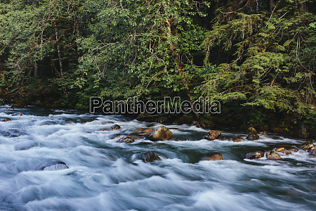 river flowing through lush temperate rainforest