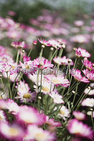 close up of spring flowers
