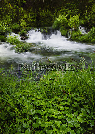 plants and flowing water in xuvia