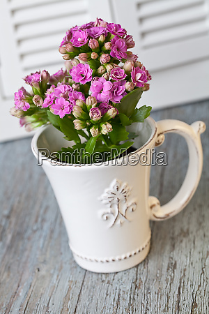 still life with pink flowers in