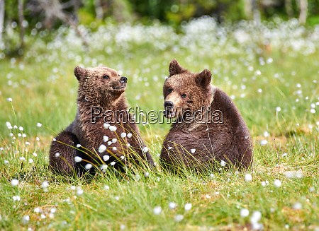 two young bears sitting in the