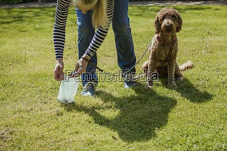 picking up dog poo