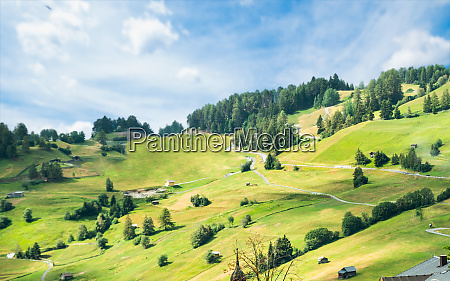 alpine pastures and fir trees