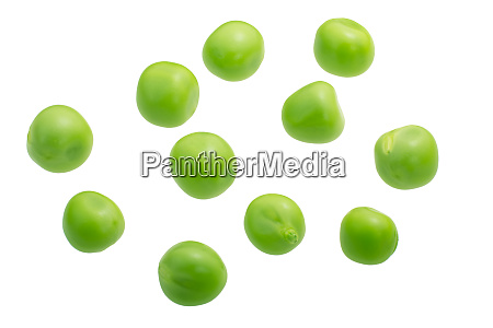 pea seeds p sativum paths top