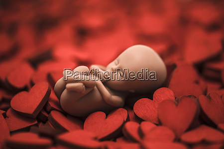 human embryo on many red hearts