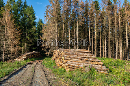 piled logs of harvested wood in