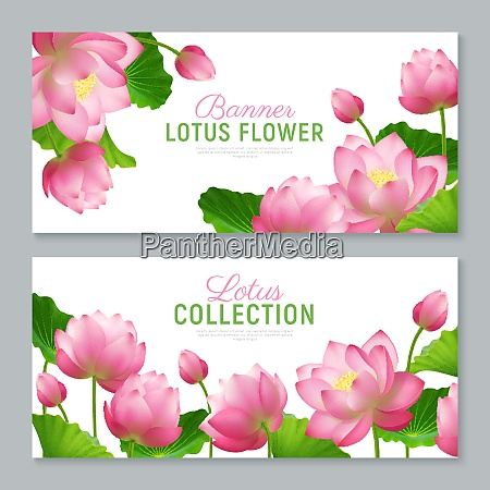 beautiful realistic lotus flowers collection 2
