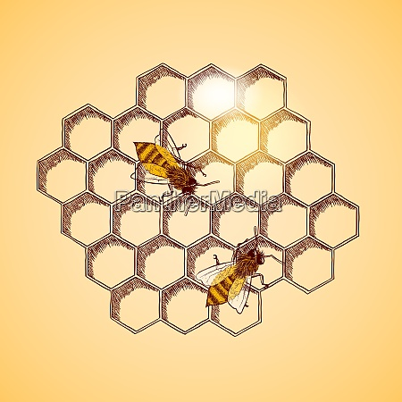 honey bees and honeycomb background vector