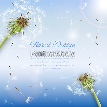 white dandelion with pollens background or