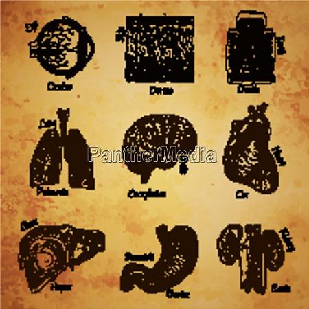 human organs sketch set of eye