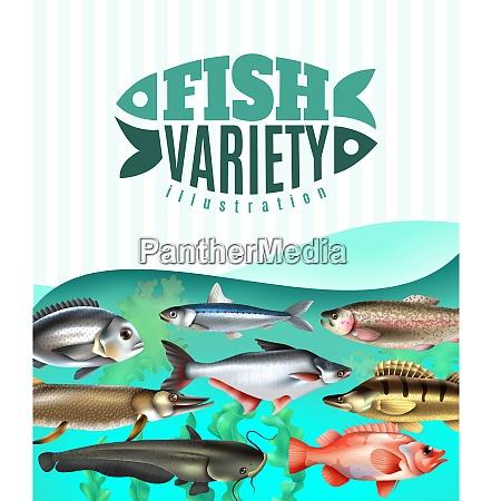 marine and river fish variety underwater
