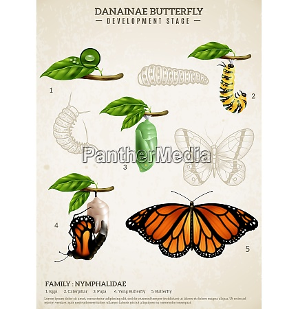 entomology realistic poster presenting development stages