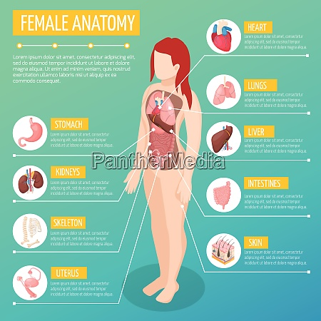 woman anatomy infographic layout with location