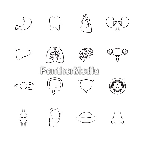 human organs outline icons set of