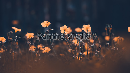 beautiful field of a wildflowers